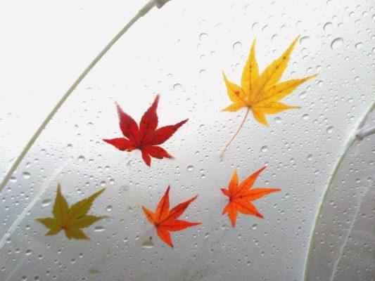 傘についた色とりどりのもみじ