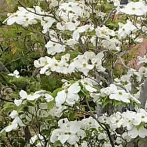 花がいっぱいだね